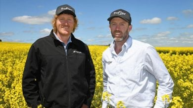 Photo of New GM canola varieties on way