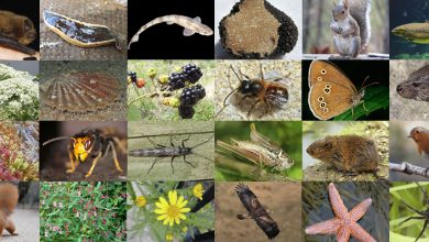 Photo of 25UK SPECIES' GENOMES SEQUENCED