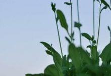 Photo of تعیین زمان گلدهی در گیاهان