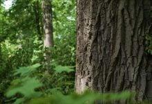 Photo of طراحی گیاهان برای آیندهای پایدار