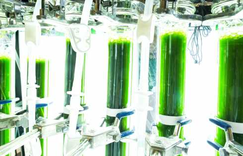 algae as fuel