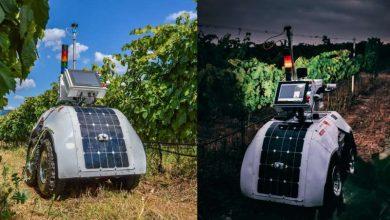 Photo of Robot created to monitor key wine vineyard parameters