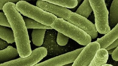 Photo of Synthetic probiotics for genetic disease treatment