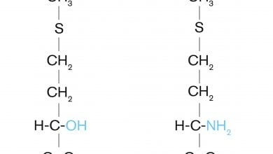 Photo of Measuring up: methionine sources