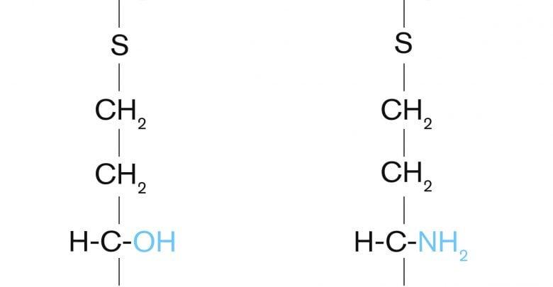 methionine sources - اخبار زیست فن