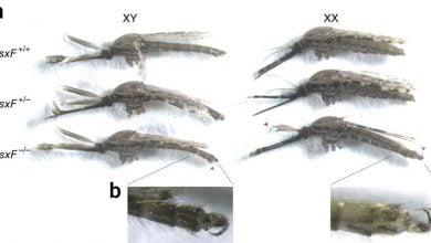 Photo of ریشهکن کردن جمعیت پشهها از طریق ویرایش ژنوم