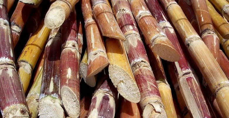 sequence of sugarcane - اخبار زیست فن