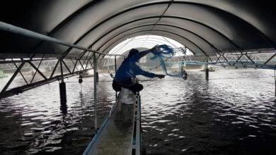 Photo of A seismic shift in shrimp farming