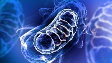 درمان بیماریهای میتوکندریال به کمک ژن درمانی