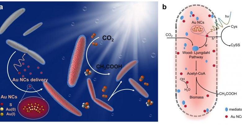 دانشمندان با استفاده باکتری Moorella thermoacetica و نانوذرات طلا سیستمی با نام M. thermoacetica-Au22 طراحی کردند که نسبت به سیستمهای قبلی کارآمدتر بوده و میزان محصول بیشتری تولید میکند.