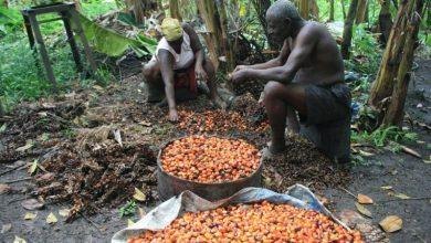 Photo of ممنوعیت صادرات روغن پالم، تهدیدی برای سرمایه گذاری در آفریقا