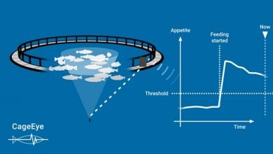 سرمایه گذاری در خوراک آبزیان