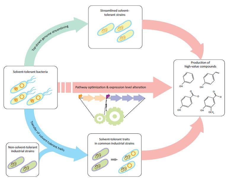 بیولوژی و مهندسی سنتز کاتالیستهای زیستی پیشرفته