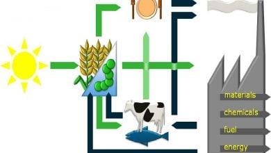 Photo of فرصت ها و موانع تولید هیدروکربنهای زیست پایه