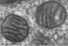 Photo of کلسیم، مسیر درمانی جدید برای اختلال میتوکندری