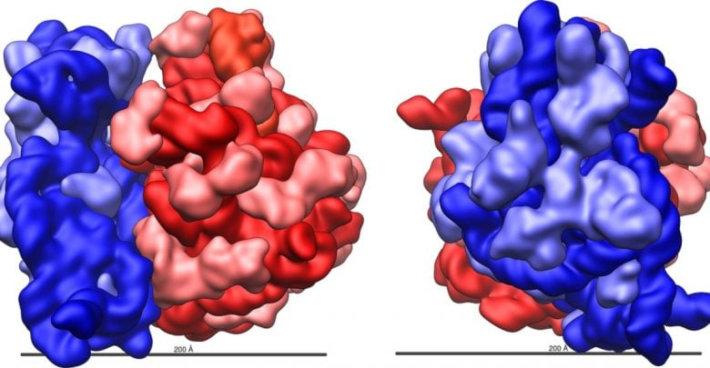 bacterial ribosomal RNA