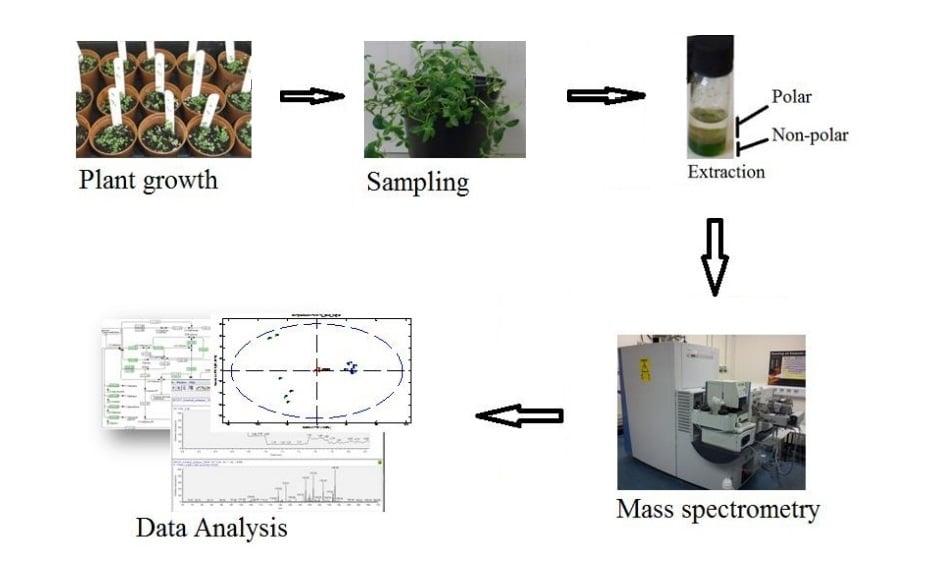 آزمایشات متابولومیکیس گیاهی با استفاده از روش MS