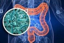 Photo of نقش باکتریهای روده در سلامت قلب