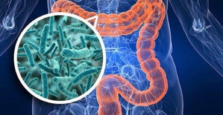 رژیمهای غذایی غنی از فیبر موجب جلوگیری از آترواسکلروز، حملات قلبی و سکته مغزی میشوند. میکروبیومها موجب پردازش بهتر فیبر میشوند.