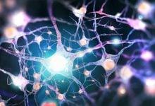 Photo of نقش سیستم عصبی در تنظیم تکثیر سلولهای بنیادی