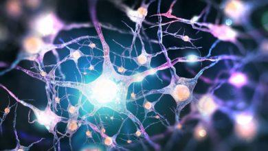 نقش سیستم عصبی در تنظیم تکثیر سلولهای بنیادی
