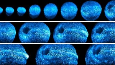 Photo of New microscope offers 4-D look at embryonic development in living mice