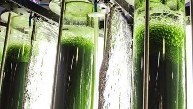Photo of تولید سوخت زیستی از میکروجلبک در مقیاس وسیع