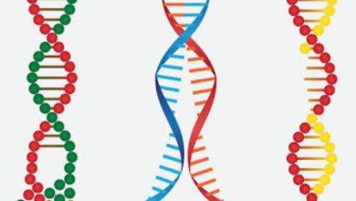 Key Gene Find - اخبار زیست فن