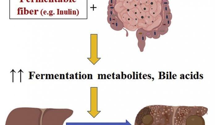 ارتباط میکروبیوتای روده با سرطان کبد
