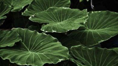 مشاهده عملکرد مستقل پلیمرهای گیاهی