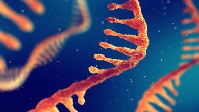 Photo of ژن درمانی به کمک مولکول RNA