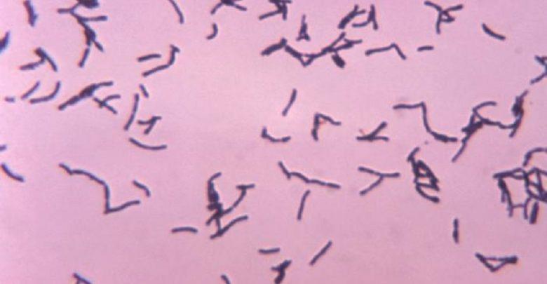 Gut Bacteria in Heart Transplant