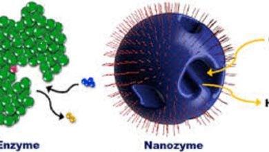 تقلید ساختار آنزیم