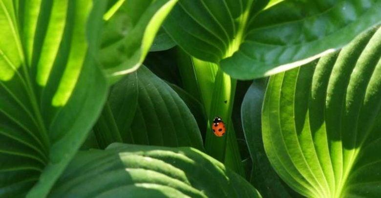 environmental stress - اخبار زیست فن