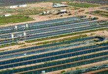 Photo of افزایش رشد پایدار جلبک برای تولید سوخت زیستی