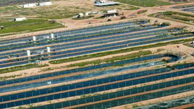 افزایش رشد پایدار جلبک برای تولید سوخت زیستی