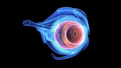 بازیابی بینایی به کمک سلولهای بنیادی