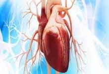 Photo of نقش اصلاح ژن در کاهش نرخ مرگ اختلالات قلبی