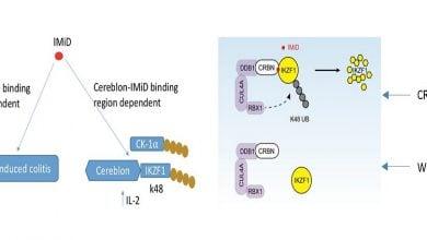 Photo of تولید مدل جدیدی از موش برای مطالعه داروهای تعدیلکننده ایمنی