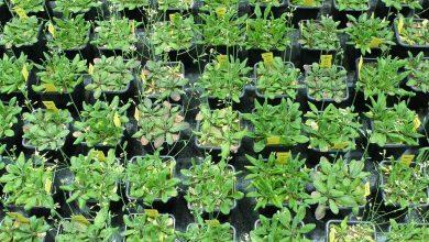 عملکرد بهتر جوامع متنوع گیاهی نسبت به جوامع تک گونه ای