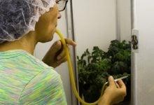 Photo of زیست فناوری برای حفاظت محصولات کشاورزی یا بیوتروریسم؟