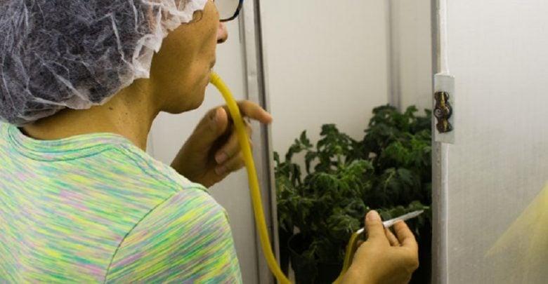 حفاظت محصولات کشاورزی یا بیوتروریسم