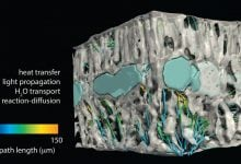 Photo of کاربرد عکسبرداری سه بعدی در علوم گیاهی