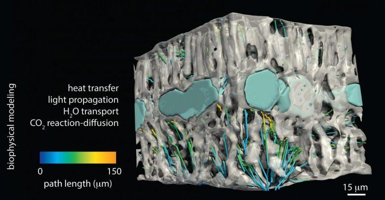 کاربرد عکسبرداری سه بعدی در علوم گیاهی