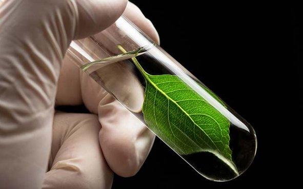 A bioplastic solution - اخبار زیست فن