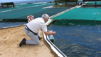 Photo of Aquaculture key to food security and nutrition