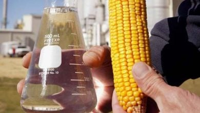 Photo of Corn Ethanol Production has Minimal Effect on Cropland Use, Study Shows