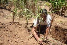Photo of Increased soil contamination puts food security at risk