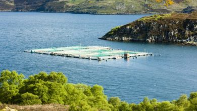 Photo of Marine Harvest, BioMar tell Scottish report that RAS is not a viable salmon farming plan