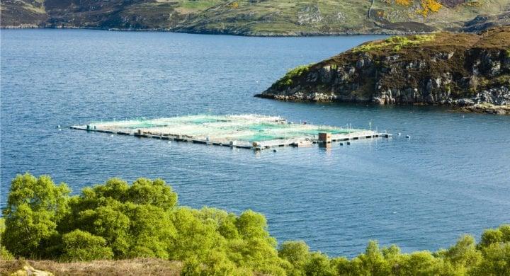 Marine Harvest - اخبار زیست فن